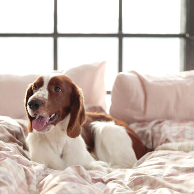 dog-in-bed